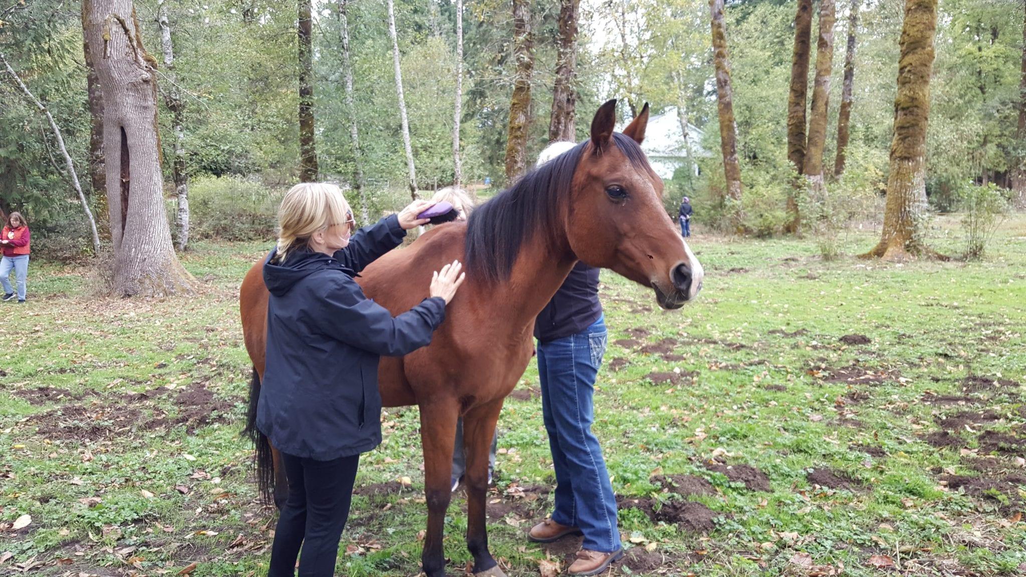 horse class