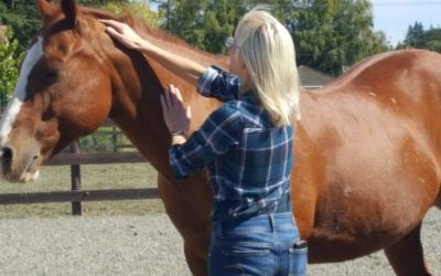 Horses Understand Change in the Body