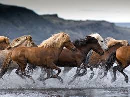 Horses Understand Community